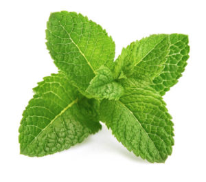 The benefits of mint, from skin problems to weight loss