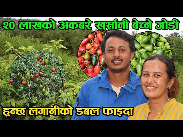 Akbare Chilli Farming in cold reason of nepal